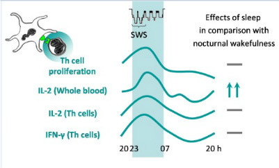 T Cell During Sleep Fig 5