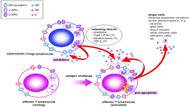 Endogenous catecholamines in immune cels discovery and function