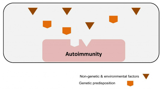 stress organ specific autoimmunity schematic figure
