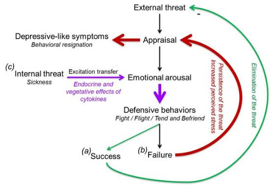 the link stress emotions cytokine fig 2