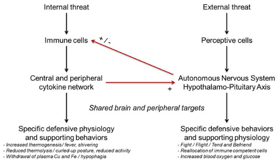 the link stress emotions cytokine fig 3