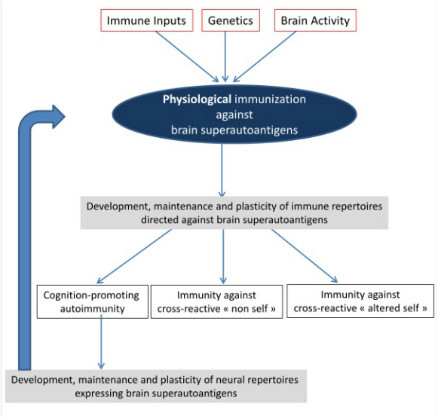 Brain Superautoantigens Figure 1