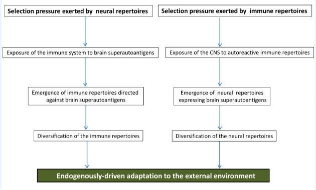 Brain Superautoantigens Figure 2