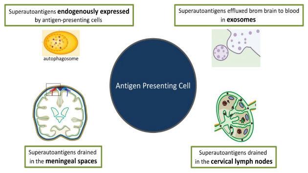 Brain Superautoantigens Figure 3